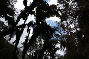 cloudforest-along-the-trail-day-3-3