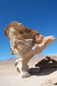 arbol-de-piedra-5