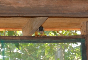 day-three-monkey-in-our-cabin