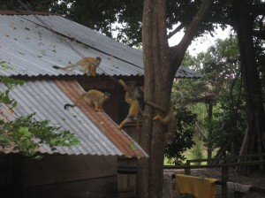 day-two-monkeys-1