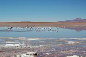 laguna-hedionda-i-flamingos-19