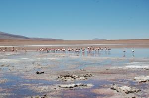 laguna-hedionda-i-flamingos-7