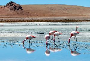 laguna-hedionda-ii-flamingos