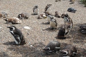 Popular penguin hang-out