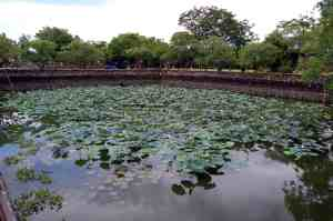 Lotuses in Pond inside Citadel