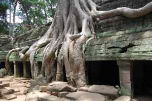 Ta Prohm was filled with these