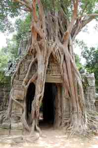Another really cool thing about the temples were these enormous trees that were taking over doorways and walls.